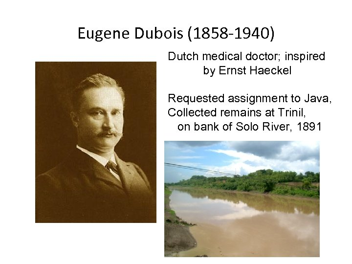 Eugene Dubois (1858 -1940) Dutch medical doctor; inspired by Ernst Haeckel Requested assignment to
