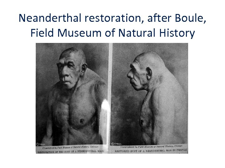 Neanderthal restoration, after Boule, Field Museum of Natural History