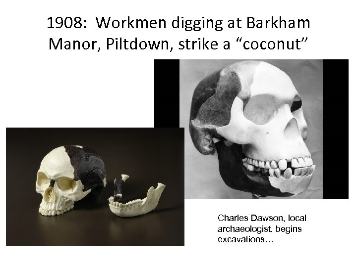 "1908: Workmen digging at Barkham Manor, Piltdown, strike a ""coconut"" Charles Dawson, local archaeologist,"