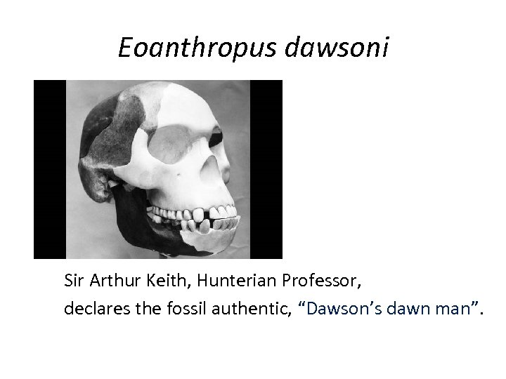 "Eoanthropus dawsoni Sir Arthur Keith, Hunterian Professor, declares the fossil authentic, ""Dawson's dawn man""."