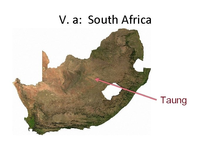 V. a: South Africa Taung
