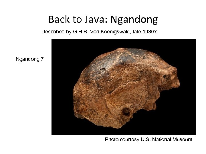 Back to Java: Ngandong Described by G. H. R. Von Koenigswald, late 1930's Ngandong