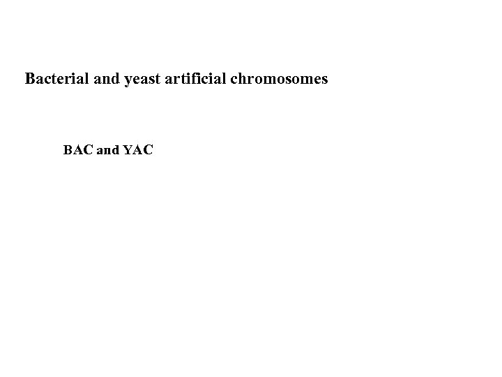 Bacterial and yeast artificial chromosomes BAC and YAC