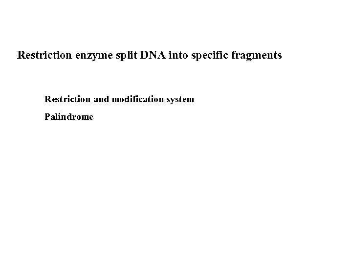 Restriction enzyme split DNA into specific fragments Restriction and modification system Palindrome