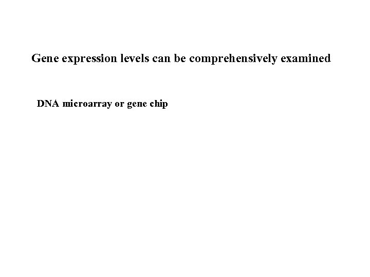 Gene expression levels can be comprehensively examined DNA microarray or gene chip