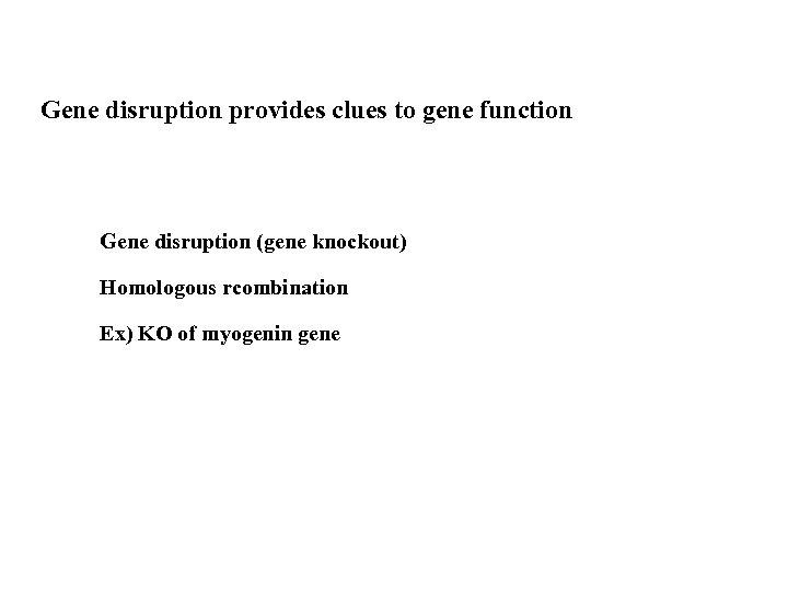 Gene disruption provides clues to gene function Gene disruption (gene knockout) Homologous rcombination Ex)