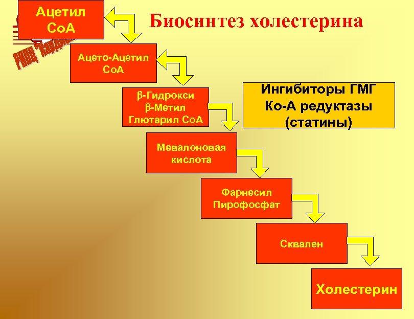 Ацетил Co. A Биосинтез холестерина Ацето-Ацетил Co. A Ингибиторы ГМГ Ко-A редуктазы (статины) b-Гидрокси