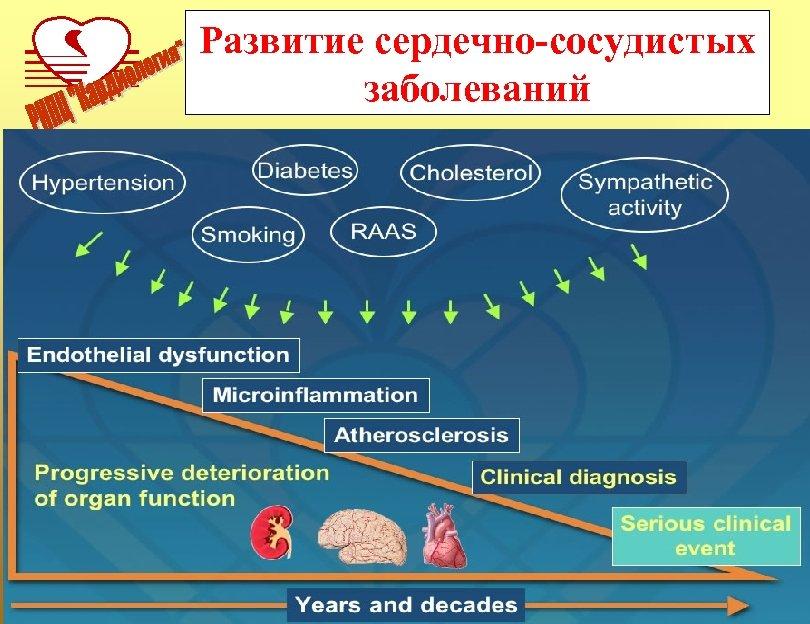 Развитие сердечно-сосудистых заболеваний