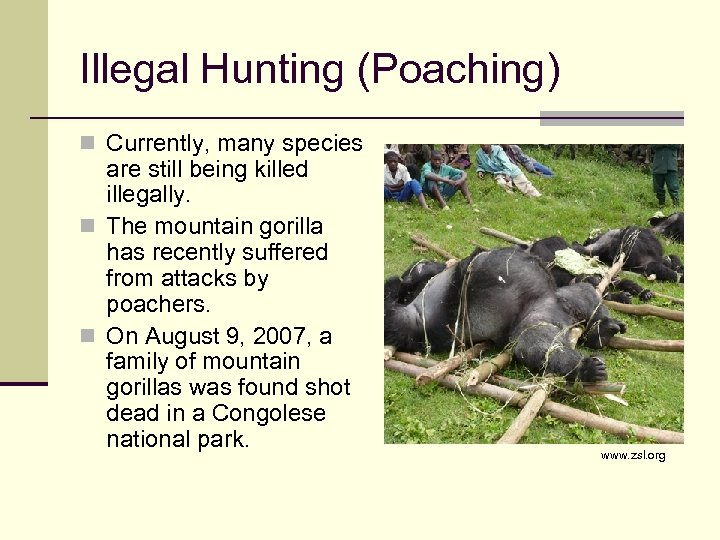 Illegal Hunting (Poaching) n Currently, many species are still being killed illegally. n The