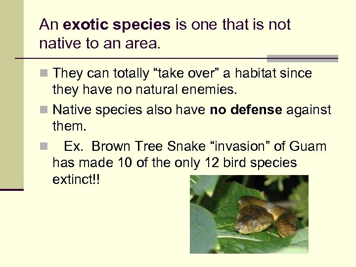An exotic species is one that is not native to an area. n They