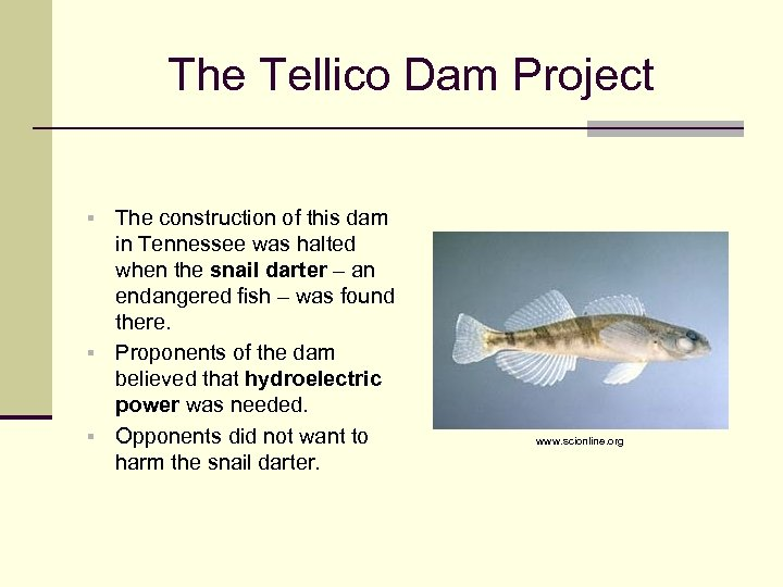 The Tellico Dam Project The construction of this dam in Tennessee was halted when