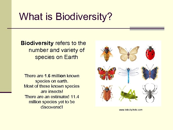 What is Biodiversity? Biodiversity refers to the number and variety of species on Earth