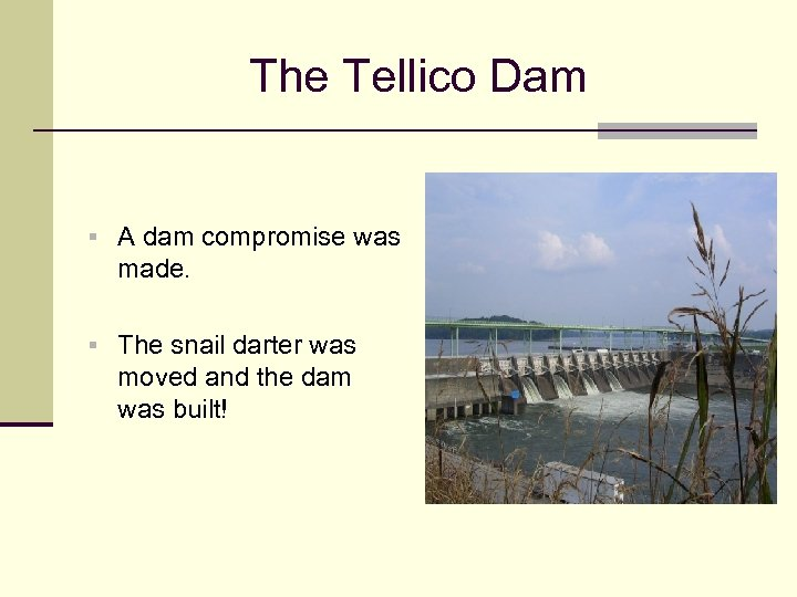 The Tellico Dam § A dam compromise was made. § The snail darter was