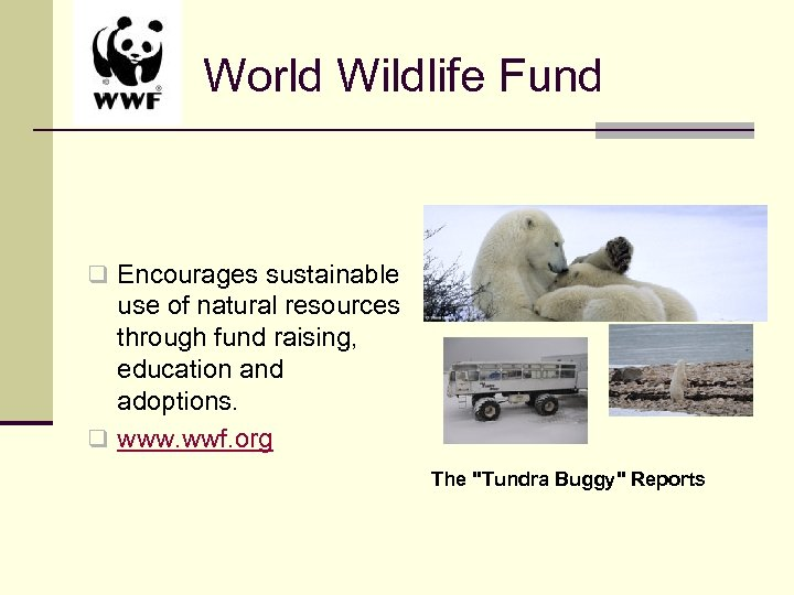World Wildlife Fund q Encourages sustainable use of natural resources through fund raising, education