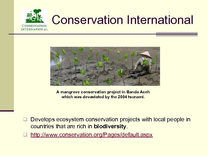 Conservation International A mangrove conservation project in Banda Aceh which was devastated by the