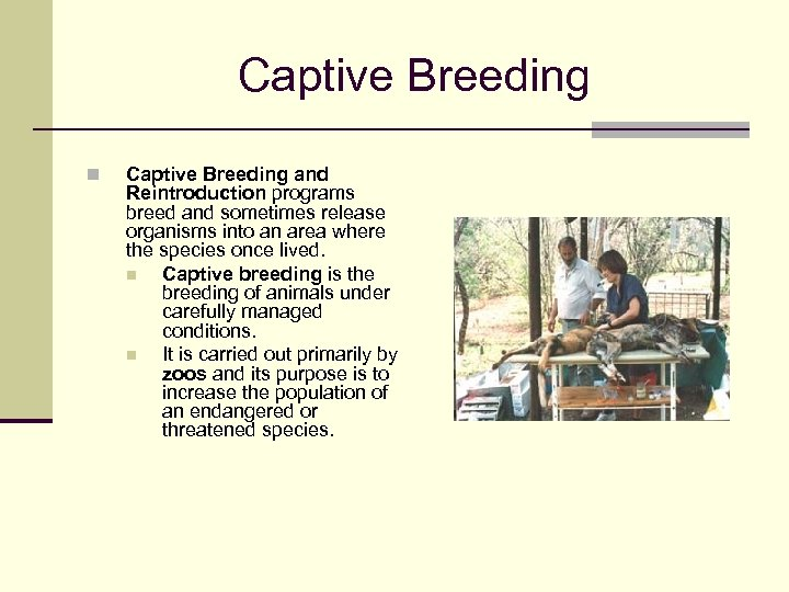 Captive Breeding n Captive Breeding and Reintroduction programs breed and sometimes release organisms into
