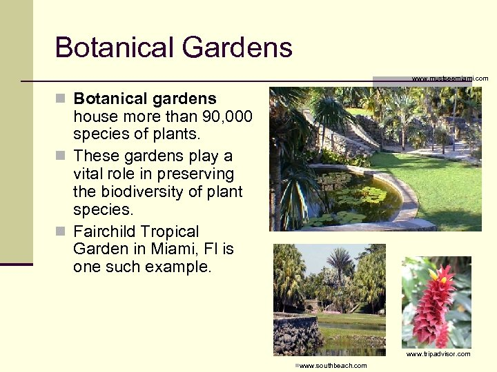 Botanical Gardens nwww. mustseemiami. com n Botanical gardens house more than 90, 000 species