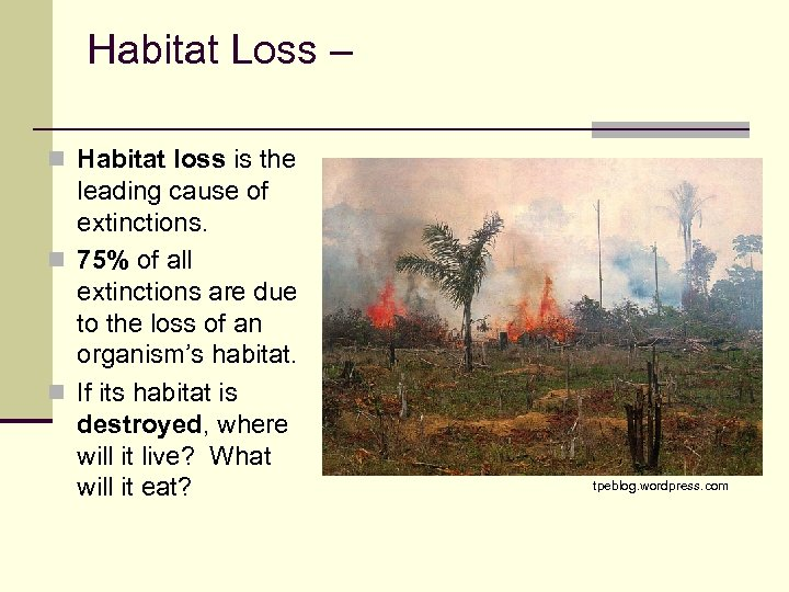 Habitat Loss – n Habitat loss is the leading cause of extinctions. n 75%