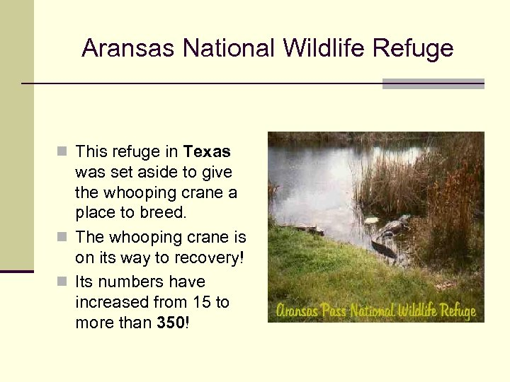 Aransas National Wildlife Refuge n This refuge in Texas was set aside to give