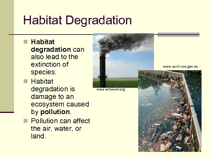 Habitat Degradation n Habitat degradation can also lead to the extinction of species. n