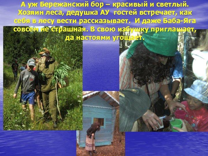 А уж Бережанский бор – красивый и светлый. Хозяин леса, дедушка АУ гостей встречает,
