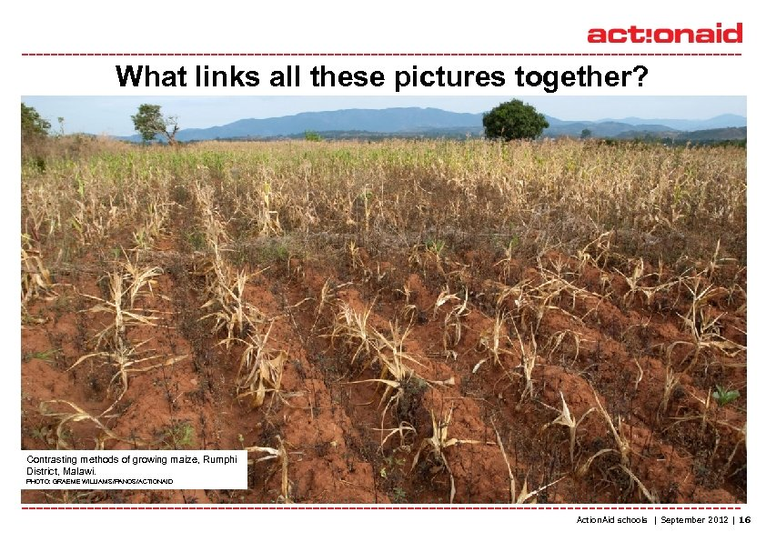 What links all these pictures together? Lina Gondwe helps sprouting maize plants to grow.