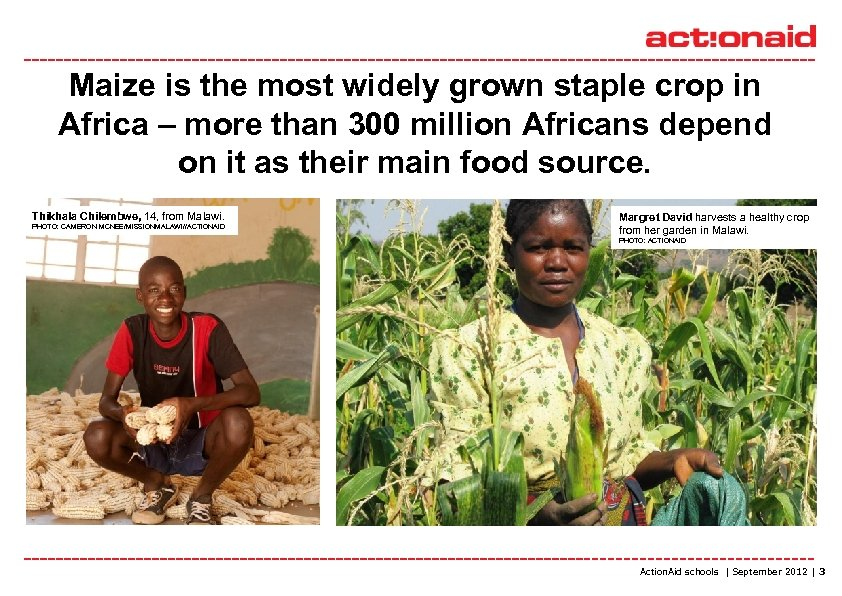 Maize is the most widely grown staple crop in Africa – more than 300