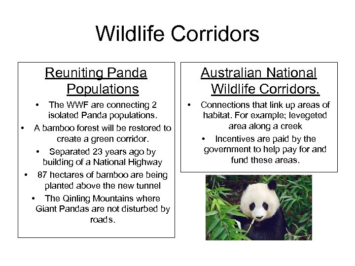 Wildlife Corridors Reuniting Panda Populations • The WWF are connecting 2 isolated Panda populations.