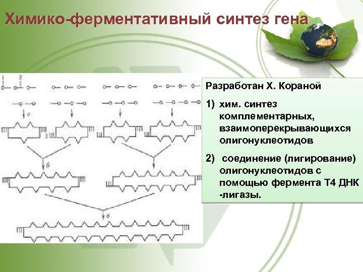 Химико-ферментативный синтез гена Разработан X. Кораной 1) хим. синтез комплементарных, взаимоперекрывающихся олигонуклеотидов 2) соединение