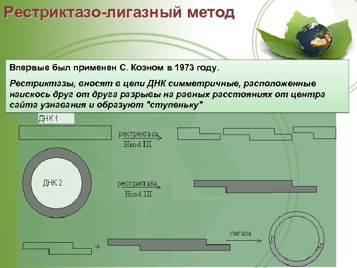 Рестриктазо-лигазный метод Впервые был применен С. Коэном в 1973 году. Рестриктазы, вносят в цепи