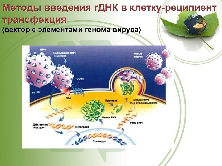 Методы введения r. ДНК в клетку-реципиент трансфекция (вектор с элементами генома вируса)