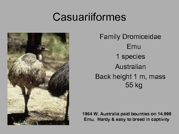 Casuariiformes Family Dromiceidae Emu 1 species Australian Back height 1 m, mass 55 kg