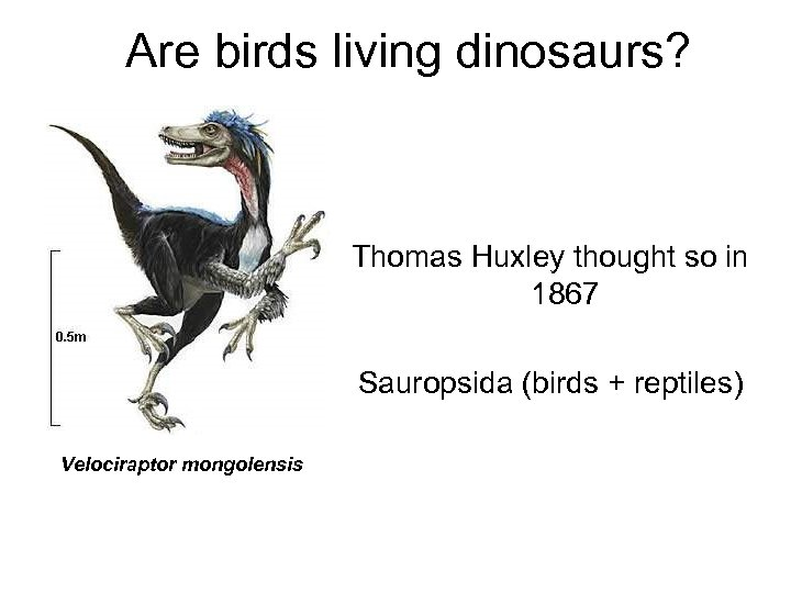 Are birds living dinosaurs? Thomas Huxley thought so in 1867 Sauropsida (birds + reptiles)
