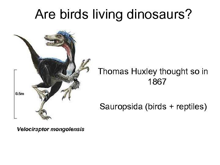 Are birds living dinosaurs? Thomas Huxley thought so in 1867 Sauropsida (birds + reptiles)