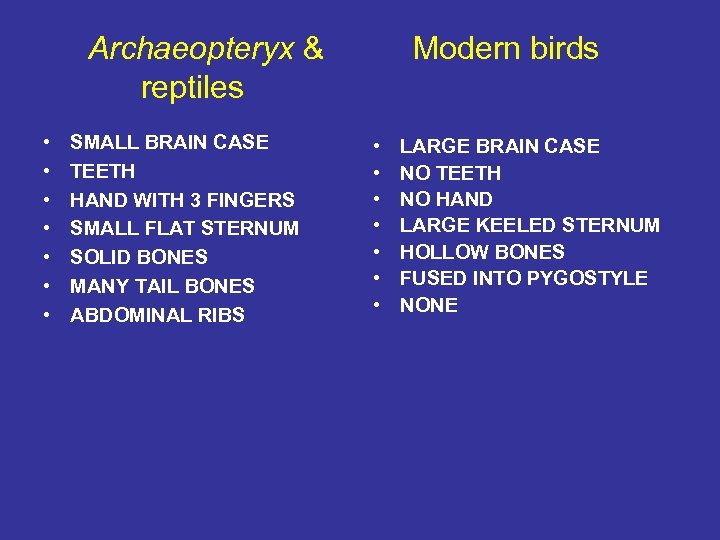 Archaeopteryx & reptiles • • SMALL BRAIN CASE TEETH HAND WITH 3 FINGERS SMALL