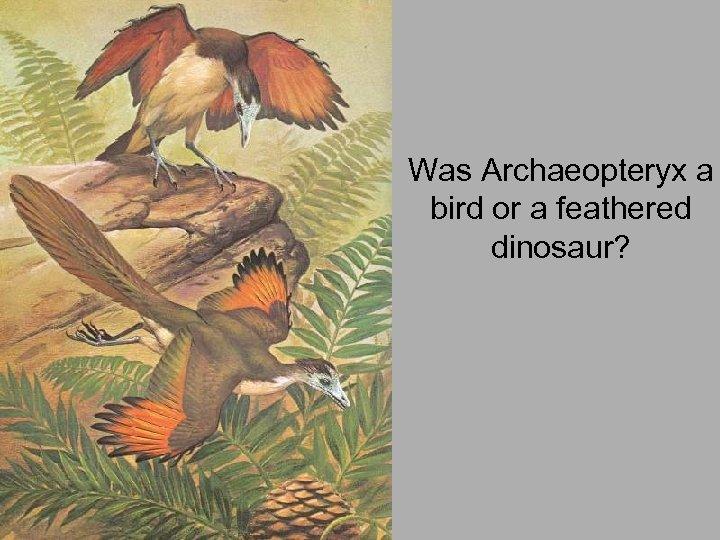 Was Archaeopteryx a bird or a feathered dinosaur?
