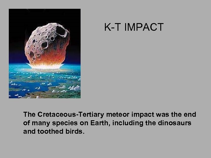 K-T IMPACT The Cretaceous-Tertiary meteor impact was the end of many species on Earth,