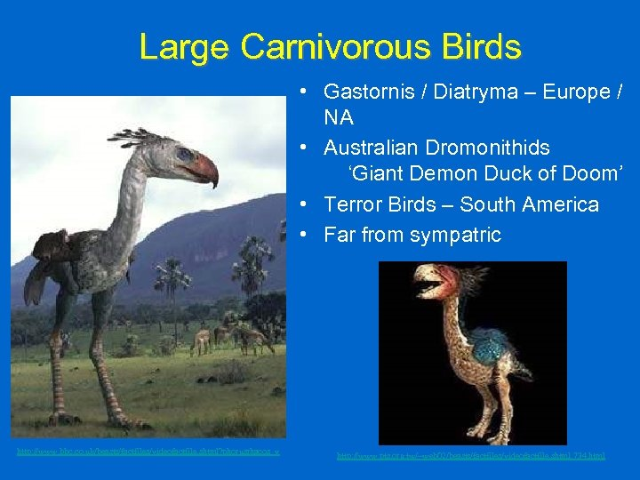 Large Carnivorous Birds • Gastornis / Diatryma – Europe / NA • Australian Dromonithids