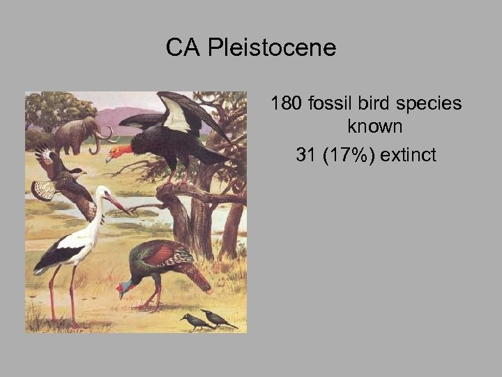 CA Pleistocene 180 fossil bird species known 31 (17%) extinct