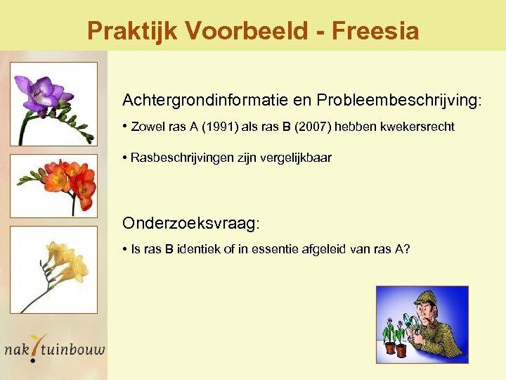 Praktijk Voorbeeld - Freesia Achtergrondinformatie en Probleembeschrijving: • Zowel ras A (1991) als ras