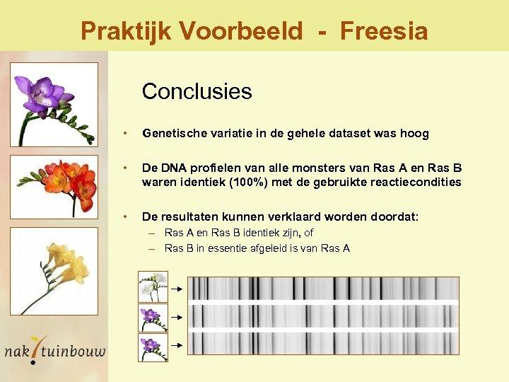 Praktijk Voorbeeld - Freesia Conclusies • Genetische variatie in de gehele dataset was hoog
