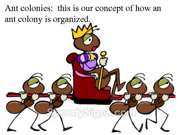 Ant colonies: this is our concept of how an ant colony is organized.