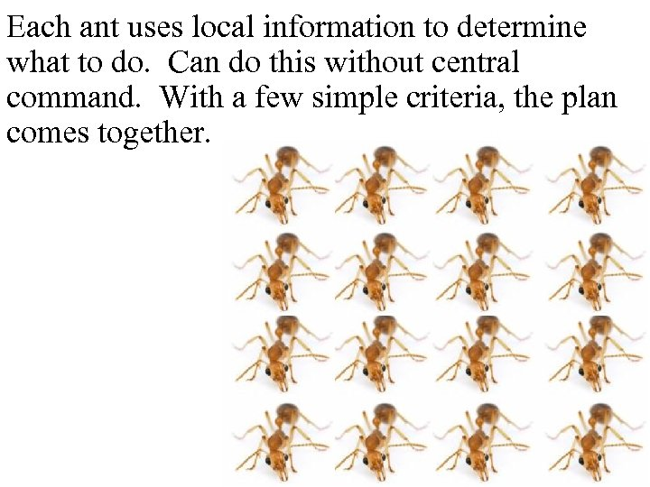 Each ant uses local information to determine what to do. Can do this without