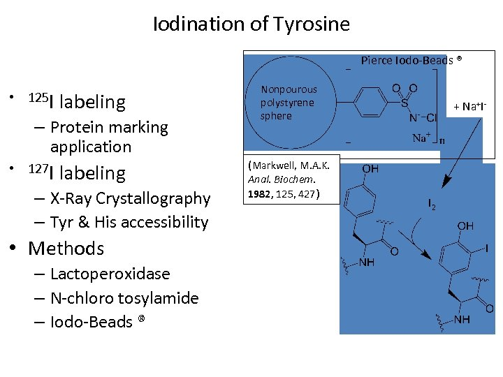 Iodination of Tyrosine Pierce Iodo-Beads ® • 125 I labeling – Protein marking application