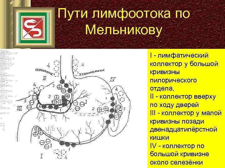 Пути лимфоотока по Мельникову I - лимфатический коллектор у большой кривизны пилорического отдела, II
