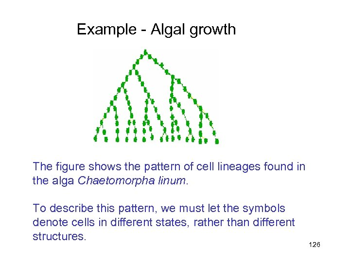 Example - Algal growth The figure shows the pattern of cell lineages found in