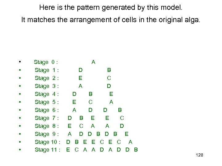 Here is the pattern generated by this model. It matches the arrangement of cells