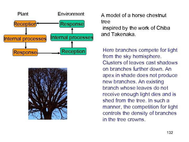 Plant Reception Environment Response Internal processes Response Reception A model of a horse chestnut