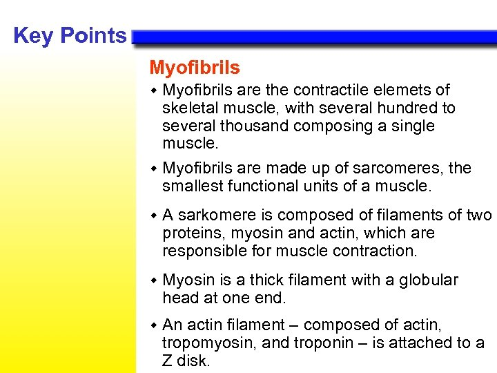 Key Points Myofibrils are the contractile elemets of skeletal muscle, with several hundred to
