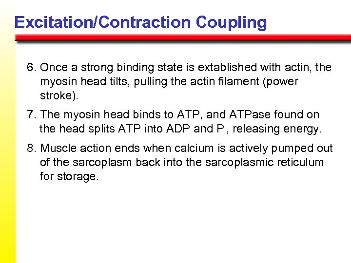 Excitation/Contraction Coupling 6. Once a strong binding state is extablished with actin, the myosin
